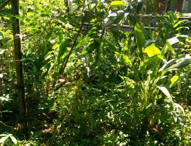 [Rumah KAIL} Pengalaman Pemulihan Kondisi Alam di Kebun KAIL